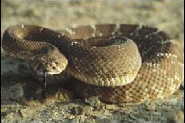 Quali sono i serpenti più pericolosi?