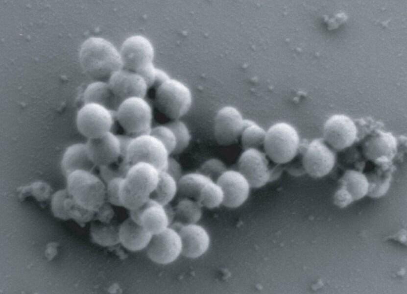 cellula-sintetica