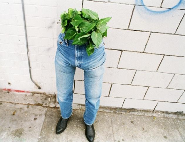 Estate e giardinaggio: otto trucchi per salvare le piante dall'afa