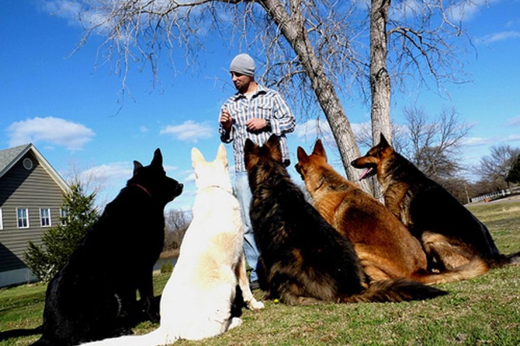 Come si diventa istruttori di cani?