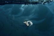 Catastrofi ambientali