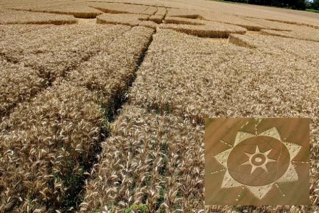 Crop circles a Cassano d'Adda: bufala alla milanese