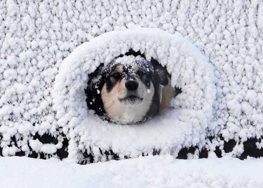 Animali Nella Neve Le Foto Più Belle Focusit