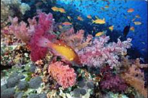 Minacciata la barriera corallina australiana