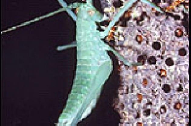 Formiche da paura: tra agguati e trappole mortali