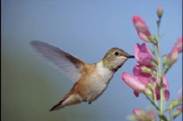 """Uccelli, prede delle tecniche da """"supermercato"""""""