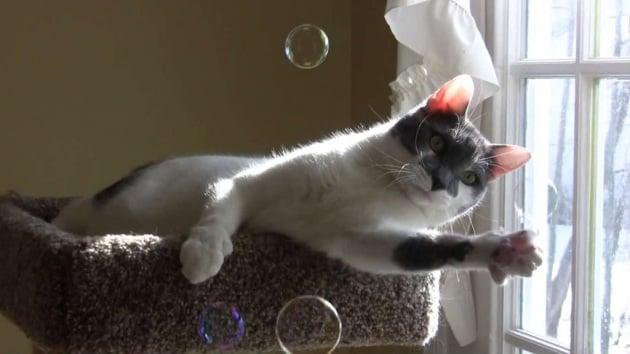 Il gatto gioca con le bolle di sapone
