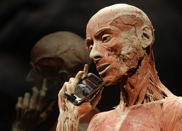 Body Worlds: il corpo nudo come non l'hai mai visto