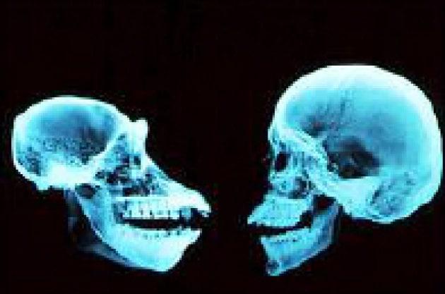 Uomini e scimpanzé non così uguali