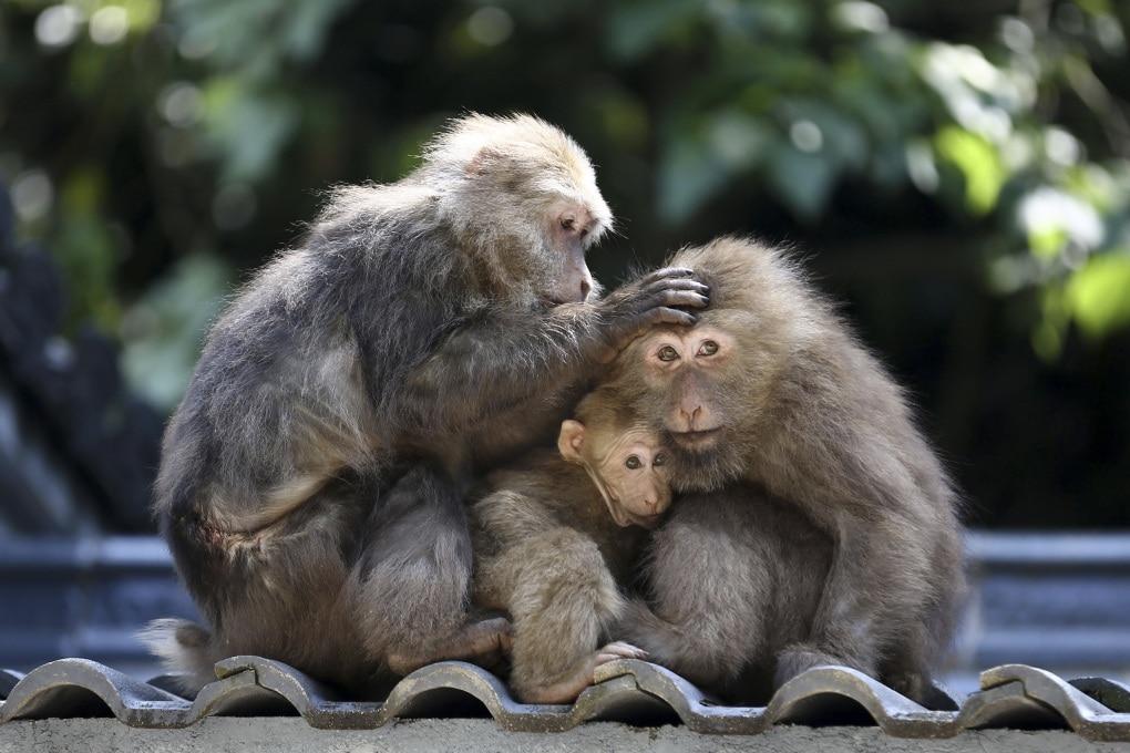 Esistono animali monogami?
