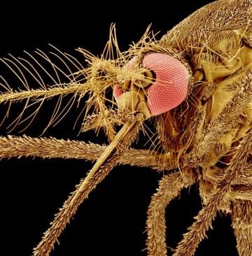 Un laser contro le zanzare