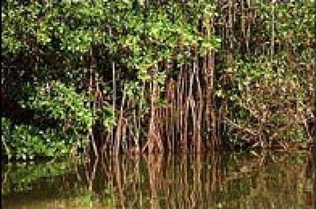 Proteggere i coralli; e le mangrovie