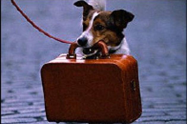 Un collare per controllare il cane a distanza
