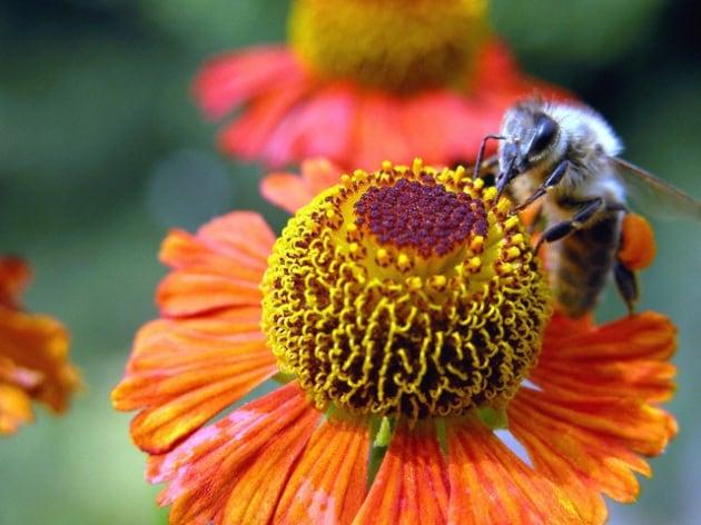 Quanti fiori devono visitare le api per produrre un kg di miele?