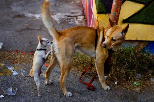 Perché i cani si annusano il sedere?