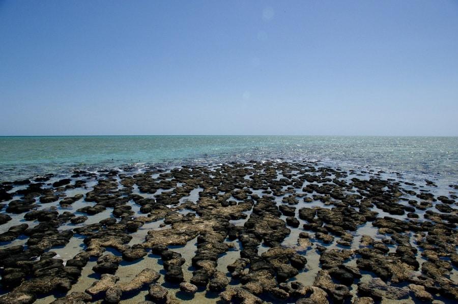 stromatoliti