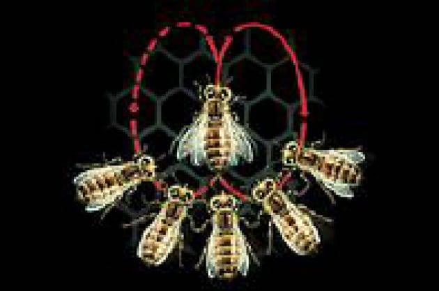 Le api danzano d'inverno