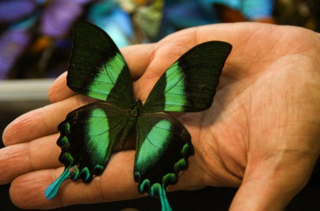 Ali di farfalla e nanotubi in carbonio