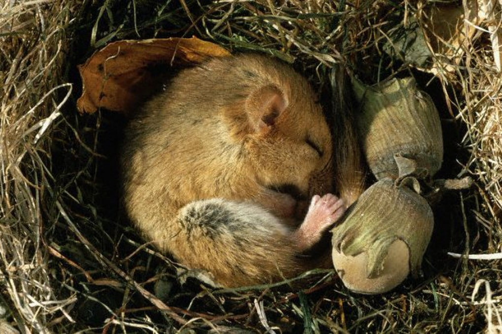 Che cosa sveglia gli animali dal letargo?