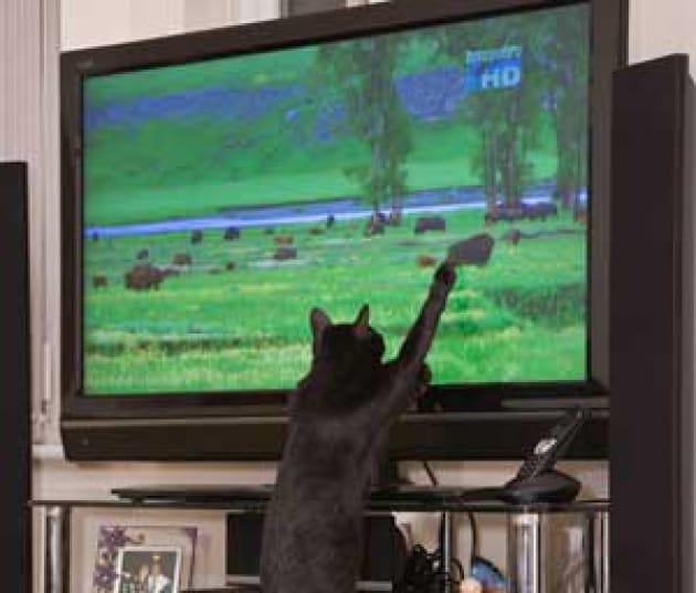 Cani e gatti seguono le immagini in tv?