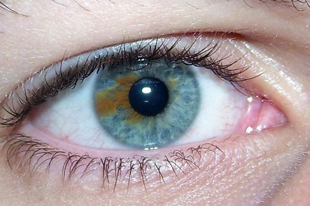 Gli occhi castani ispirano più fiducia di quelli azzurri