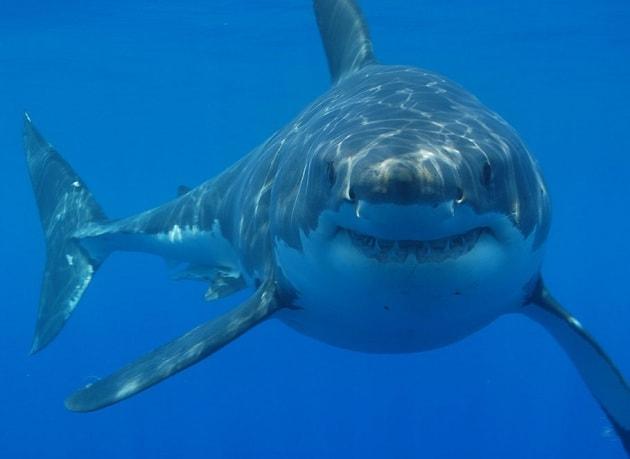 Lo squalo non fa più paura!