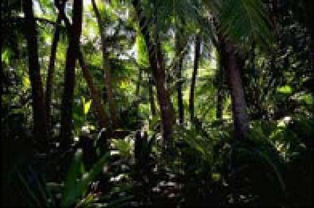 Per un pugno di dollari, si salva la biodiversità