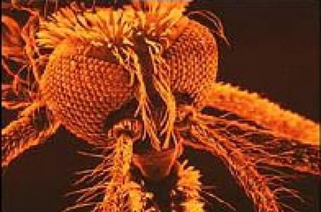 Come resistere agli insetticidi