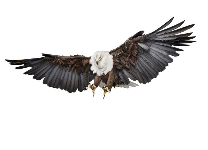 070115az_eagle0182