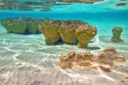 Le più antiche forme di vita scoperte in Australia