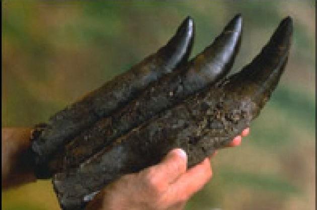 Dinosauri, morsi e barbecue