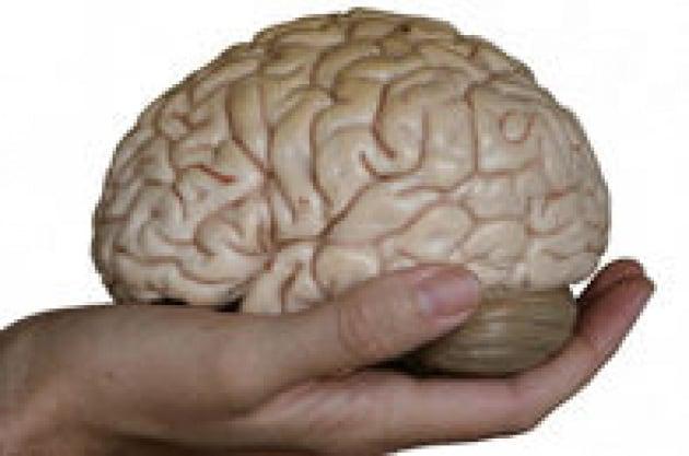 Sei un bullo! Lo dicono i tuoi neuroni