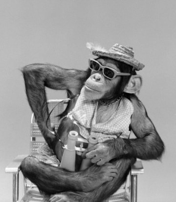 Le scimmie hanno le impronte digitali?