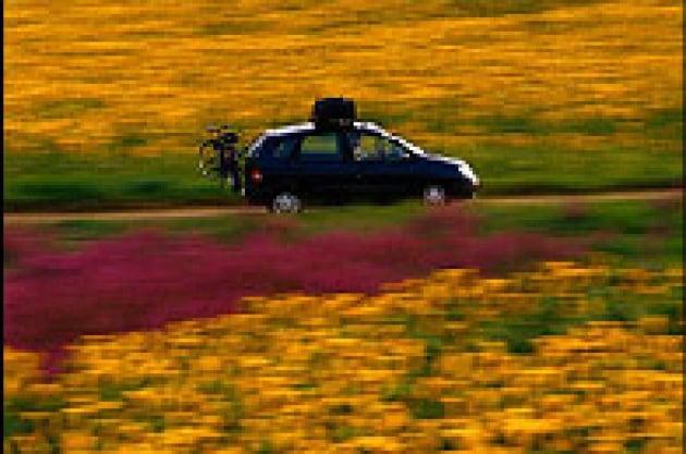 Sarà un fiore a far muovere le auto del futuro?