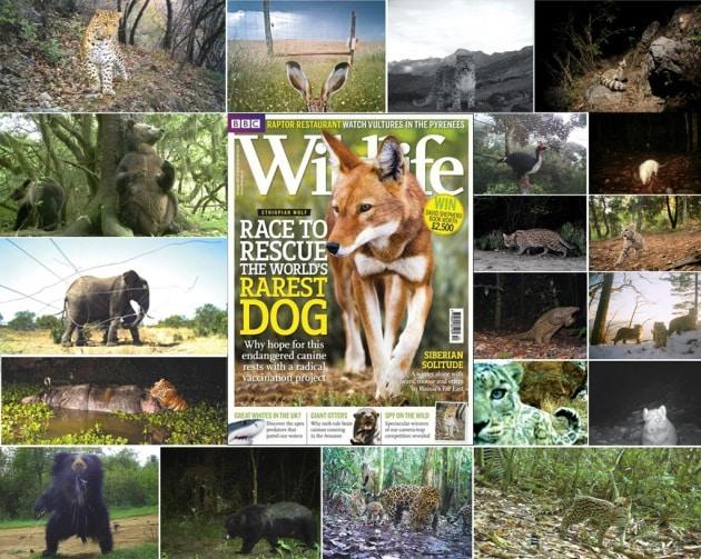 Le più belle foto di animali selvaggi scattate da telecamere nascoste