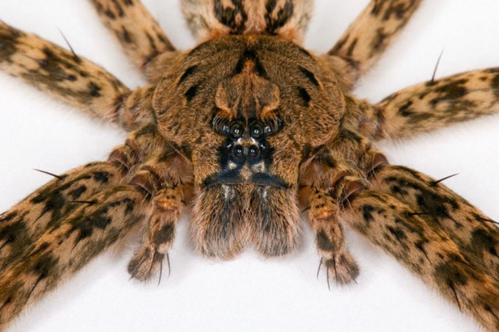 Qual è l'animale con più occhi?