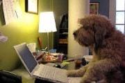 cane_ufficio