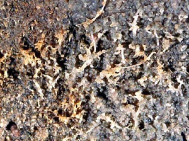 1210_microscopic_web