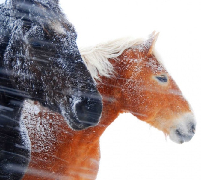 Cavalli Le Più Belle Foto E Mille Curiosità Focus It