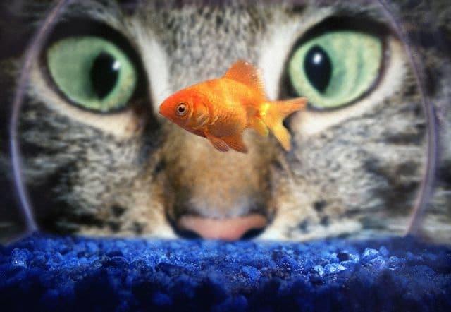 Le pi belle foto di gatti for Gatti con occhi diversi