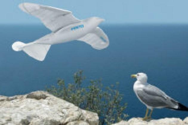 SmartBird, il robot gabbiano