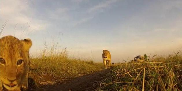 Ecco cosa si prova a finire tra le fauci di un leone
