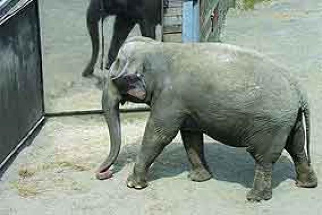 elefantestr
