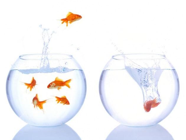 Perché i pesci saltano fuori dall'acquario?