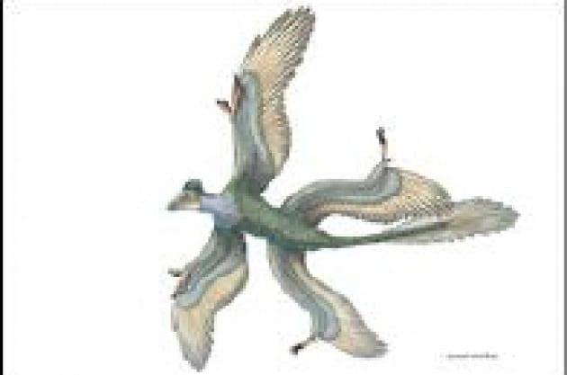 Quattro ali per l'uccello-dinosauro