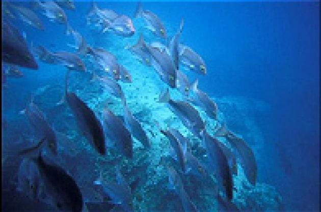 Salviamo le foreste marine