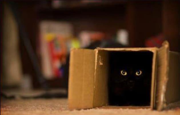 Come sta il gatto di Schrödinger?