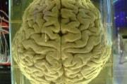 human_brain_in_a_vat