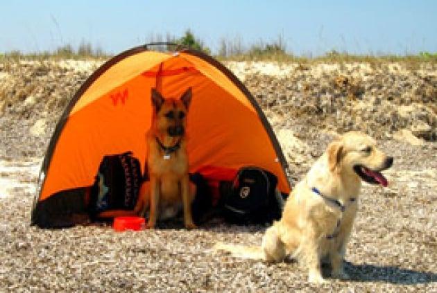 Vacanze da cani? No grazie