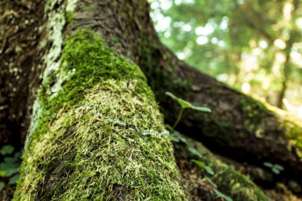 Il muschio danneggia gli alberi?